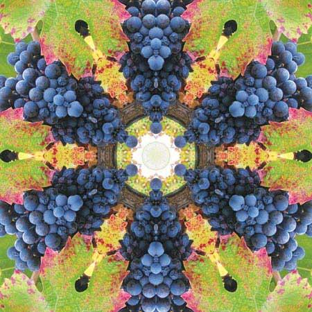 Grapes7