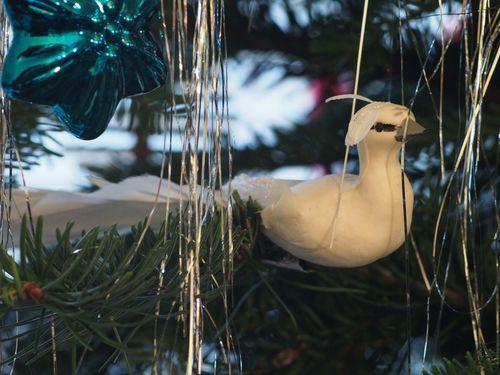 Wh bird blog
