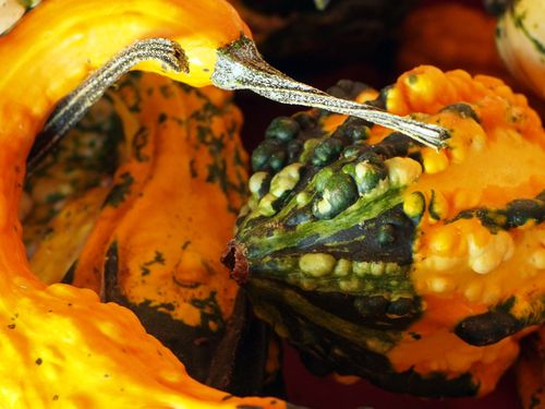 Swan gourd blog
